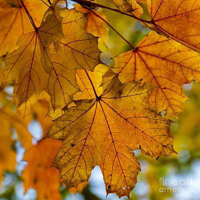 Photograph - Orange Leaf by Alissa Beth Photography