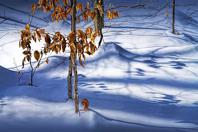 Photograph - Orange Leaves In The Winter Snow by Randall Nyhof