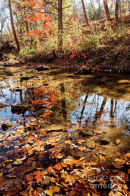 Art Print featuring the photograph Orange Leaves by Iris Greenwell