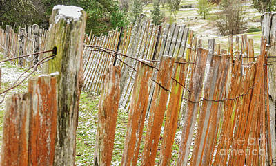 Photograph - Orange Lichen Fence by Lexa Harpell
