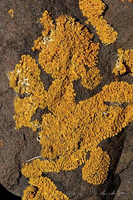 Fort Stark Photograph - Orange Lichen by Ron St Jean