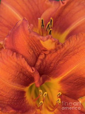 Photograph - Orange Lilies by Cathy Donohoue