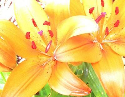 Photograph - Orange Lilies by Karen Molenaar Terrell