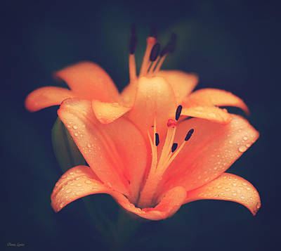 Photograph - Orange Lilies Raindrops by Anna Louise