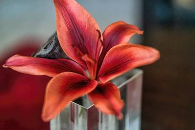 Art Print featuring the photograph Orange Lilly And Her Companion Abstract by Diana Mary Sharpton