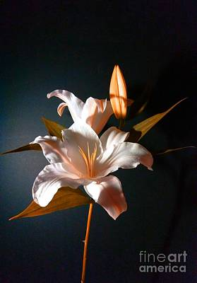 Photograph - Orange Lily by Delynn Addams