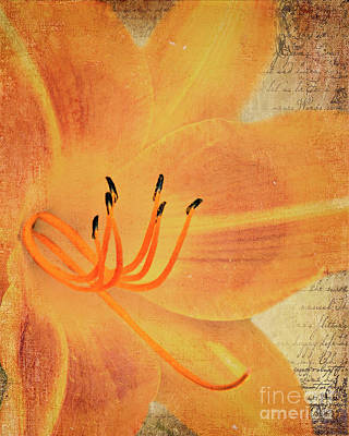 Photograph - Orange Lily by Pam  Holdsworth