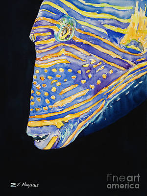Triggerfish Painting - Orange-lined Trigger by Tanya L Haynes - Printscapes