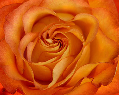 Photograph - Orange Love by Ann Bridges