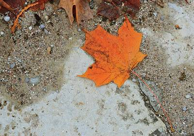 Digital Art - Orange Maple Leaf  by Lyle Crump