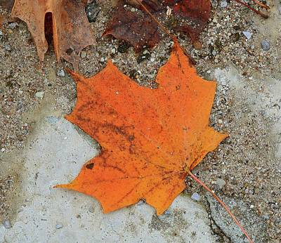 Digital Art - Orange Maple Leaf Two  by Lyle Crump