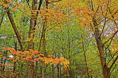 Photograph - Orange Maple Leaves On Trail To North Beach Park In Ottawa County, Michigan by Ruth Hager