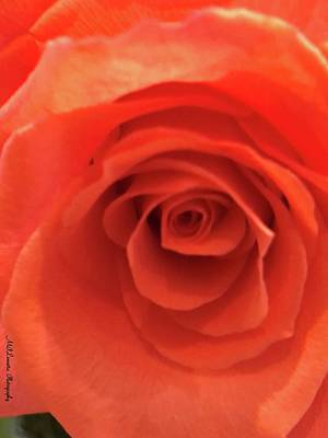 Photograph - Orange by Marian Palucci-Lonzetta