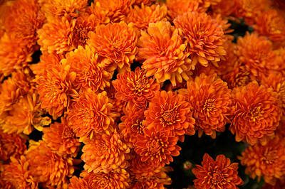Photograph - Orange Mums by Lawrence Boothby