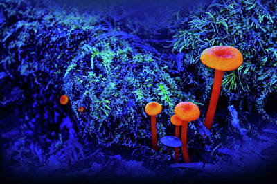 Champagne Photograph - Orange Mushrooms by Art Spectrum