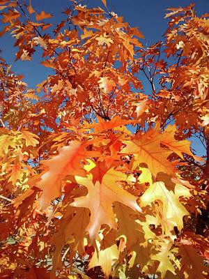 Photograph - Orange Oak Leaves Of Fall by Marilyn Hunt