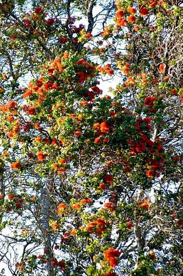 Photograph - Orange Ohia Lehua Forest  by Lehua Pekelo-Stearns