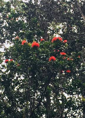 Photograph - Orange Ohia Lehua On My Morning Walk by Lehua Pekelo-Stearns