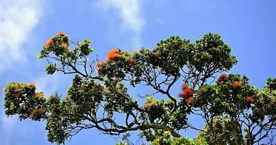 Photograph - Orange Lehua On A Ranch In Volcano, Hawaii  by Lehua Pekelo-Stearns