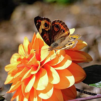 Photograph - Orange On Orange by Mary Haber