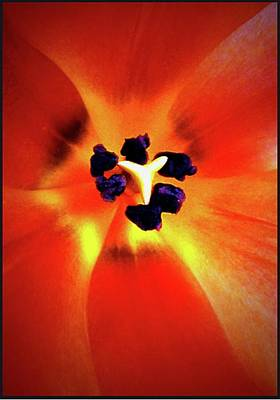 Photograph - Orange Orchid by Kelly Mills