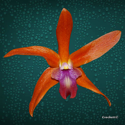 Photograph - Orange Orchid Single by Gary Crockett