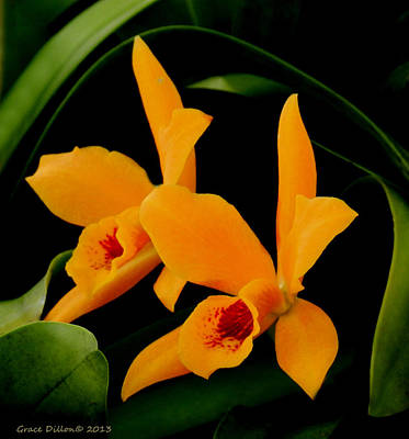 Orange Orchids Art Print
