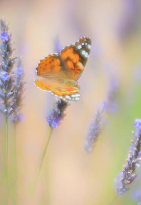 Photograph - Orange Painted Lady Butterfly On Purple Flowers by Barbara Rogers