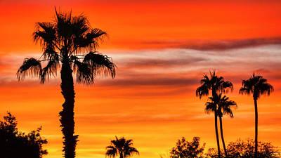 Photograph - Orange Palm Sunset  by Saija Lehtonen
