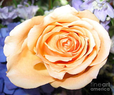 Photograph - Orange Peach Colored Rose by Rose Santuci-Sofranko