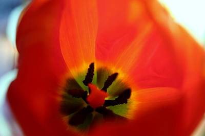 Photograph - Orange Petal by Adrienne Christian