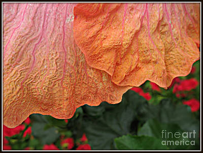 Photograph - Orange Pink.. by Jolanta Anna Karolska