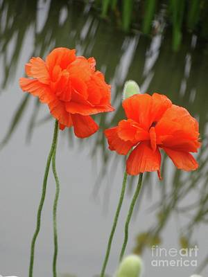 Photograph - Orange Poppies Reflections by Rebecca Overton
