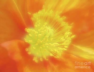 Orange Poppy Art Print by Addie Hocynec