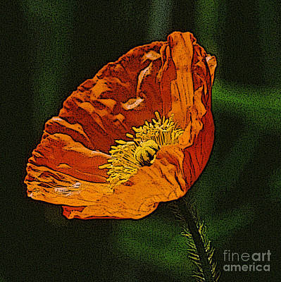 Diane Berry Digital Art - Orange Poppy by Diane E Berry