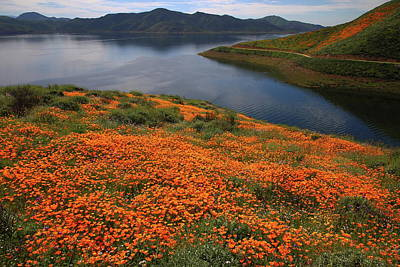 Art Print featuring the photograph Orange Poppy Fields At Diamond Lake In California by Jetson Nguyen