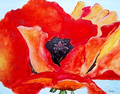 Orange Poppy Art Print