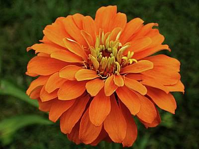 Photograph - Orange Pow by Karen McKenzie McAdoo