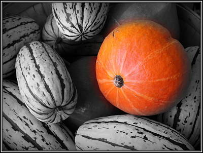 Photograph - Orange Pumpkin On Black And White by Dora Sofia Caputo Photographic Design and Fine Art