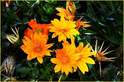 Photograph - Orange Radiance by Sonali Gangane