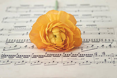 Photograph - Orange Ranunculus On A Music Sheet by Kim Hojnacki
