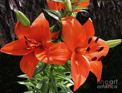 Photograph - Orange Red Asian Lilies by Frances  Dillon