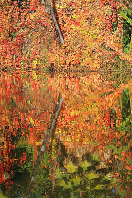 Photograph - Orange Reflections by Art Block Collections