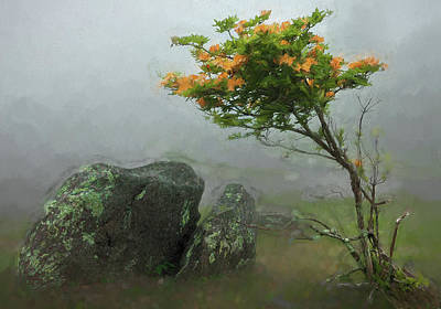 Painting - Orange Rhododendron In The Blue Ridge Ap by Dan Carmichael