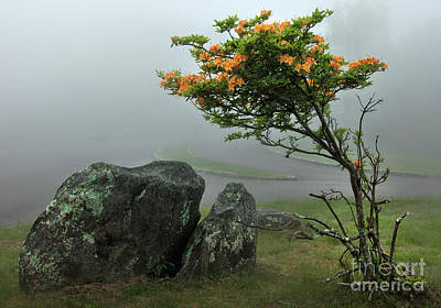 Photograph - Orange Rhododendron In The Blue Ridge by Dan Carmichael