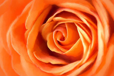 Photograph - Orange Rose by Cindi Ressler
