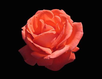 Photograph - Orange Rose On Black by MTBobbins Photography
