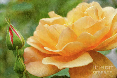 Photograph - Orange Rose Painterly by Jennifer White