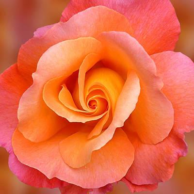 Photograph - Orange Rosebud Highlight by Gill Billington