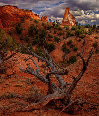 Photograph - Orange Sentinel by Tim Bryan